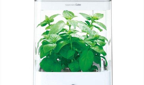 失敗なし!インテリアにも!家庭菜園なら水耕栽培器が大人気