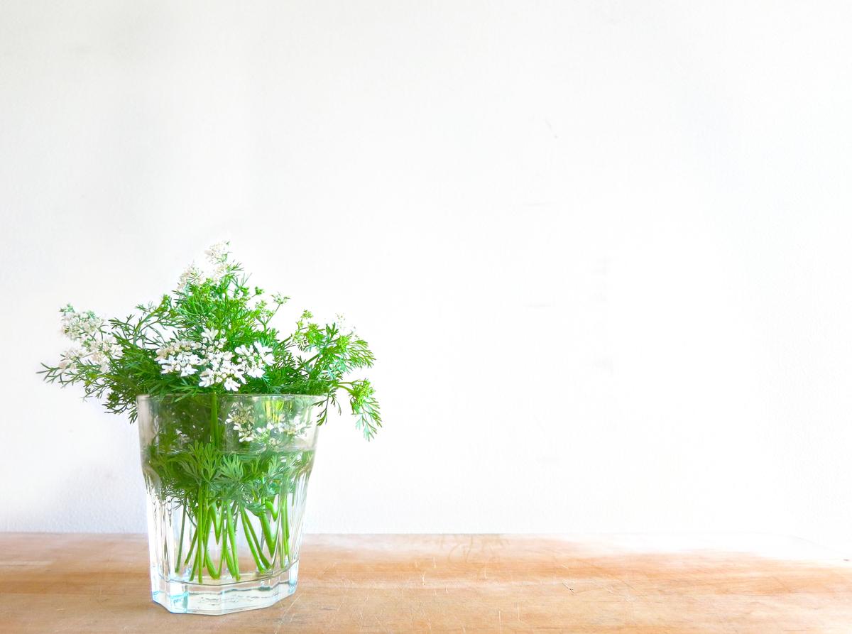 パクチー 花