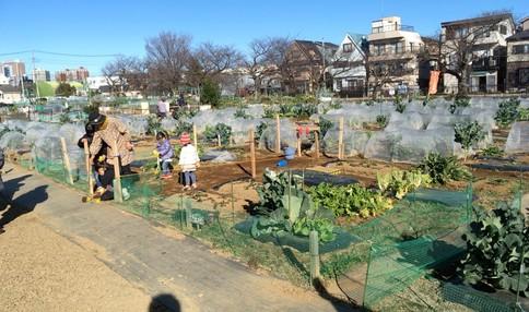 多くのお野菜が育てられています