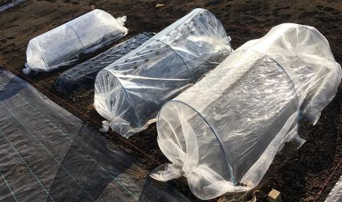 無農薬に必須の防虫ネット 葉を虫から守ります