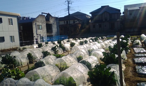 青葉農園風景 多くのお野菜が育てられています
