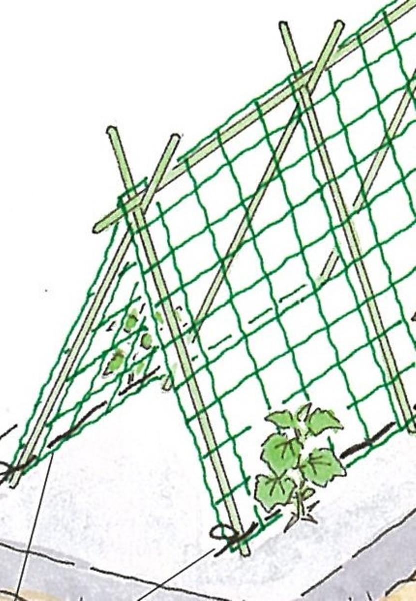 畑で家庭菜園_キュウリの育て方_合掌仕立て(ネットはる)