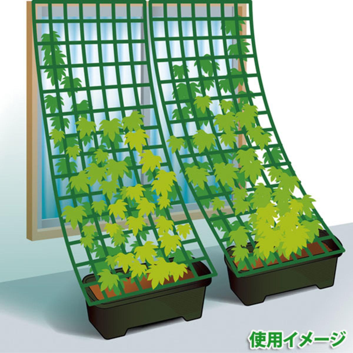 畑で家庭菜園_キュウリの育て方_緑のカーテン風仕立て