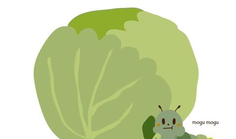 """アブラナ科(コマツナ、キャベツ、ハクサイ)は """" なぜ """"  虫がつきやすいのか?"""