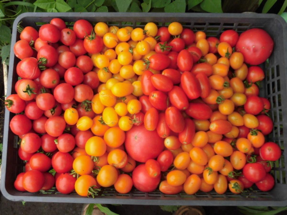 ブログトマト