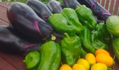 夏野菜の収穫例です!