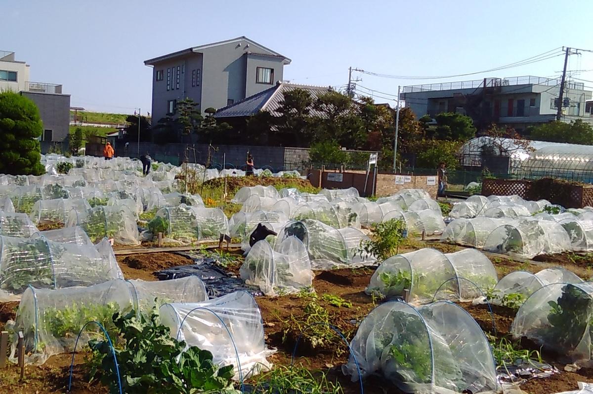 江戸川小岩風景(トリミング)