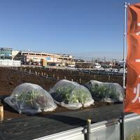 シェア畑 FujisawaSST