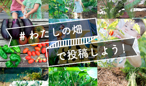 無農薬野菜を5名様にプレゼント!「#わたしの畑」フォトコンテスト開催中