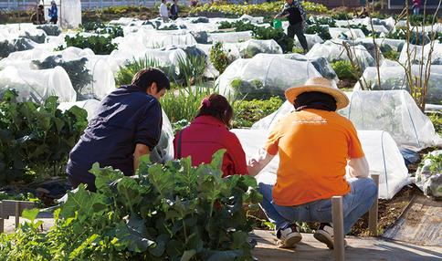 【菜園アドバイザー全員アンケート】年齢・経歴・栽培歴など…気になるあれこれ聞いてみました!