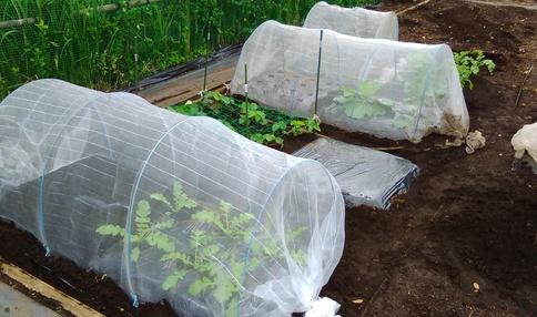 1区画の例です。基本的に4畝で野菜を作ります