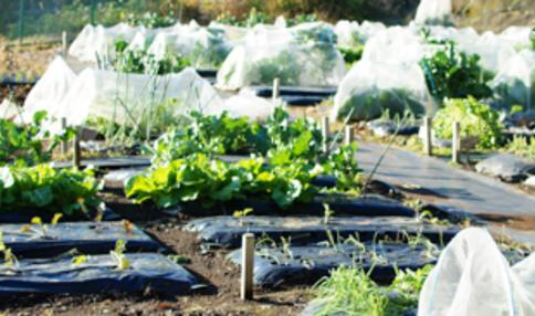 【2018年最新】東京都内の区民農園・体験農園の仕組み・料金等をまとめました!