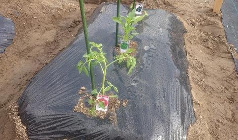 野菜の成長は驚きが沢山あります!