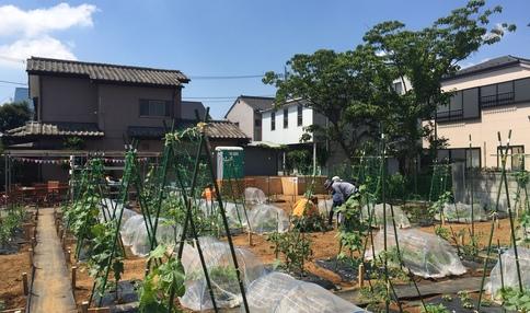 葛飾柴又の農園風景です