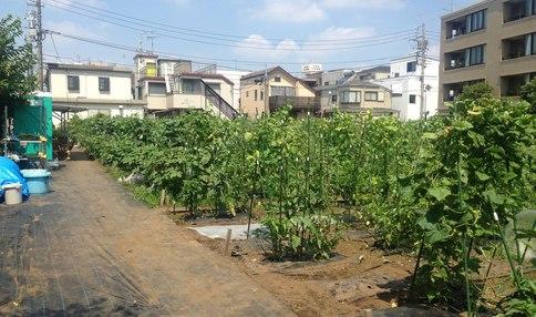 たくさんの野菜が植えてあります