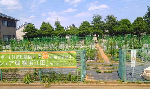 シェア畑 横浜江田