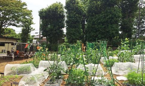 農園風景、多くの野菜が育てられています