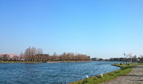 水元公園の水辺の風景