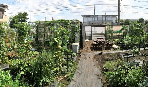 みなさん様々なお野菜を育てています