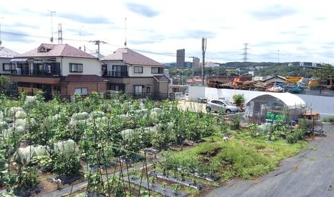多摩落川新倉体験農園