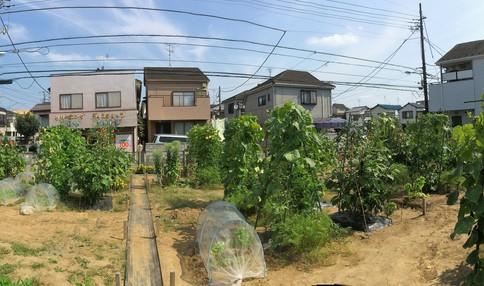 農園では様々な野菜が育てられています