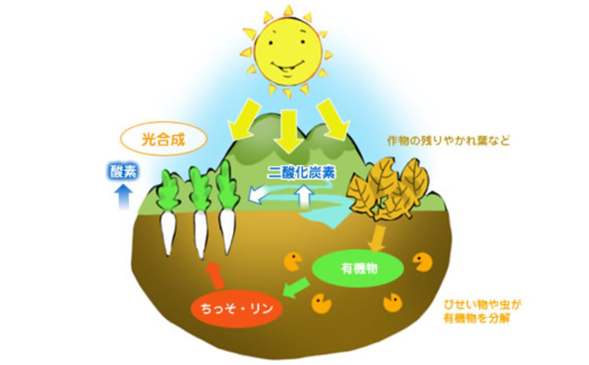 微生物の働き、土作り