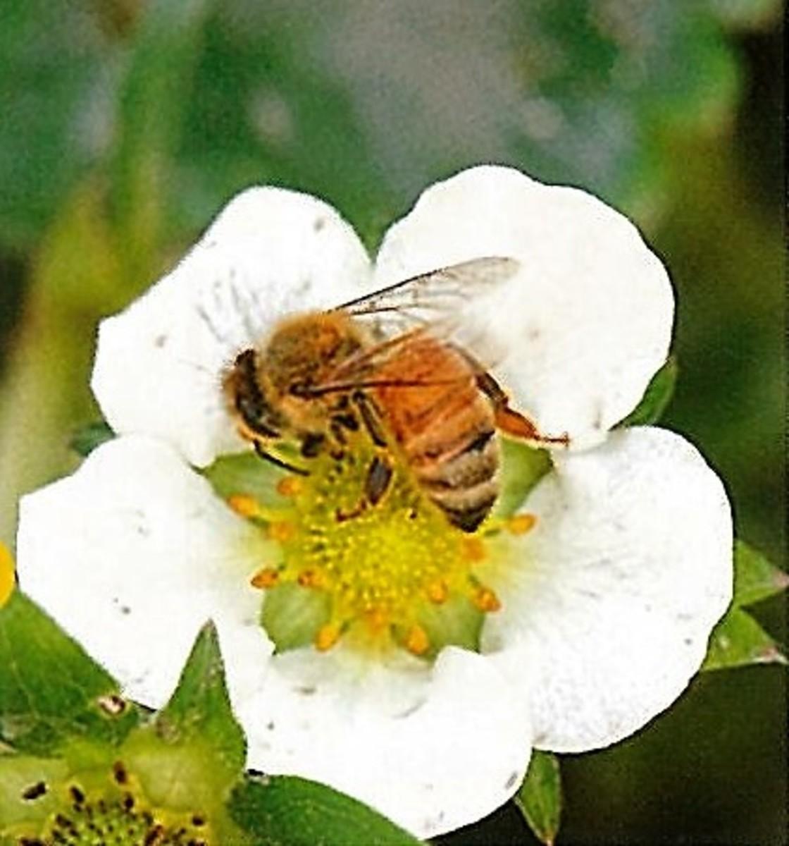 ③ハチの受粉