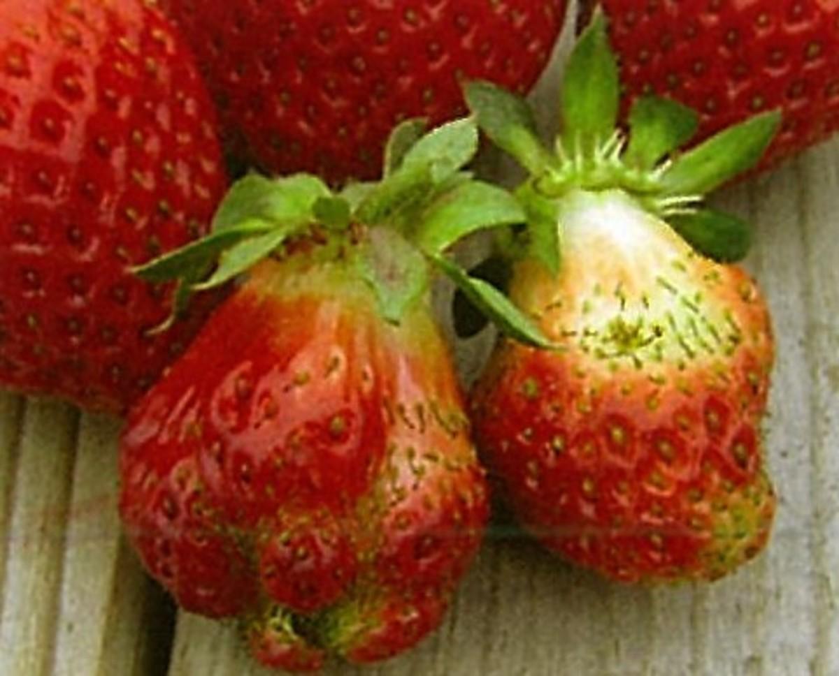 ④形の悪いイチゴ