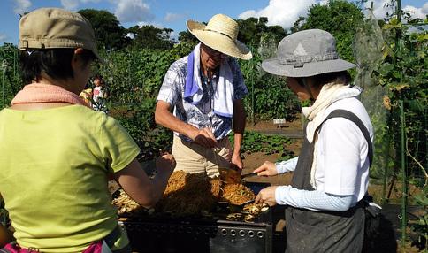 納涼祭イベント、畑のお野菜を使ってます