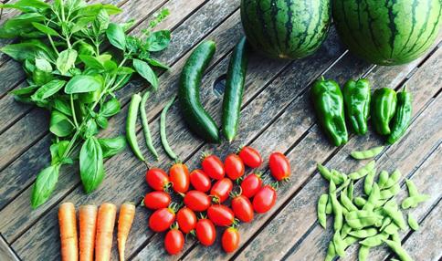 採れたてのお野菜 夏だと毎日この量が採れます