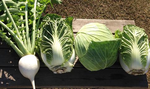 とても大きなお野菜たち!おいしそうです