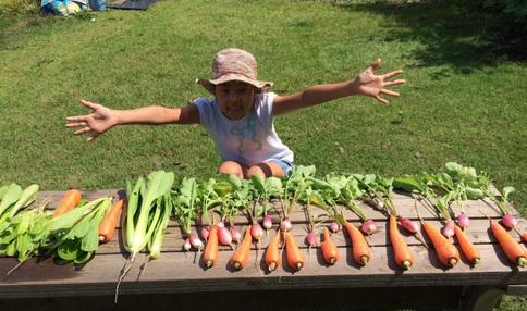 いっぱい野菜採れました!!